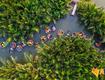 Tour du lịch Đà Nẵng   Rừng dừa bảy mẫu 1 ngày