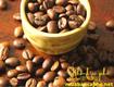 Chuyên cung cấp cà phê nguyên chất tại bình dương