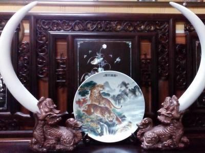 Bộ Ngà Voi trang trí, trưng bày loại to cực đẹp và độc đáo 1