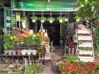 Bán chậu, hạt giống hoa, rau củ quả  phân bón tại Tam Kỳ. 4