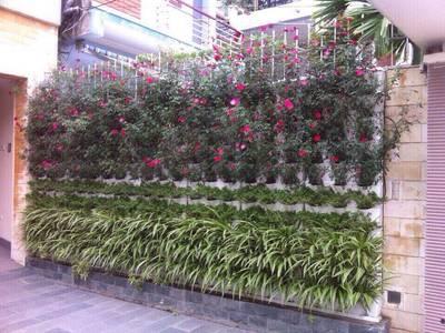 Cung cấp thiết bị trồng rau sạch, vườn tường tại hải phòng 3