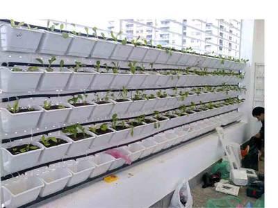 Cung cấp thiết bị trồng rau sạch, vườn tường tại hải phòng 6