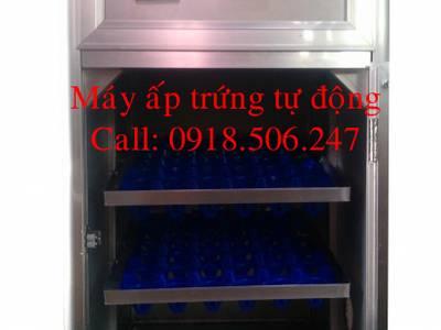 Bán máy ấp trứng tự động tại sài gòn, khu vực tây nguyên và các tỉnh miền nam 12