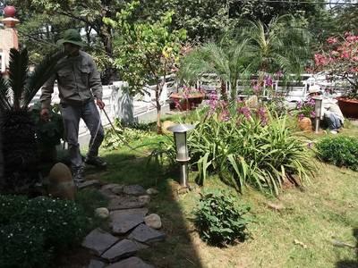 Dịch vụ chăm sóc cây cảnh, cây văn phòng, duy tu cảnh quan, tieucanhxanh.com 1