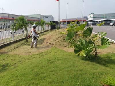 Dịch vụ chăm sóc cây cảnh, cây văn phòng, duy tu cảnh quan, tieucanhxanh.com 4