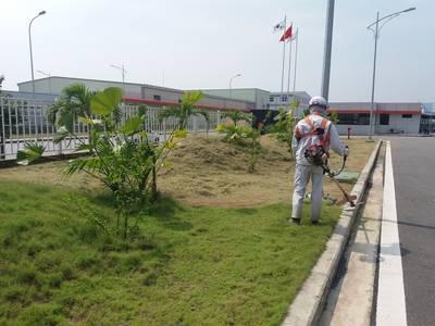 Dịch vụ chăm sóc cây cảnh, cây văn phòng, duy tu cảnh quan, tieucanhxanh.com 6