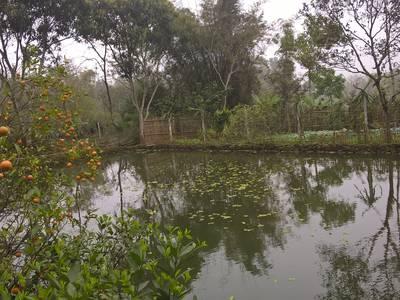 Bán nhà vườn tại Thanh Sơn - Phú Thọ 4