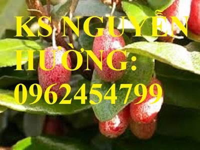Địa chỉ cung cấp cây giống nhót ngọt, cây ngót, cây nhót mỹ, giao cây toàn quốc 2