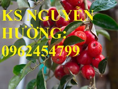 Địa chỉ cung cấp cây giống nhót ngọt, cây ngót, cây nhót mỹ, giao cây toàn quốc 5