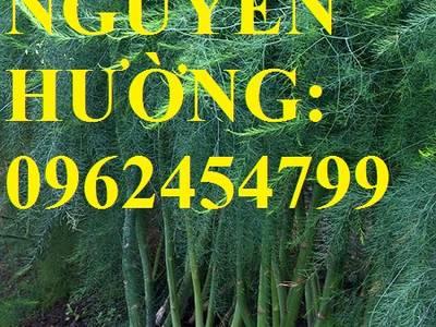 Địa chỉ cung cấp cây giống măng tây giá rẻ, cây giống sinh trưởng cho năng suất cao, giao cây tận nơ 0