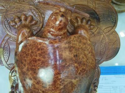 Rùa và rồng nu hương 13