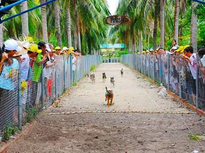 Tour Nha Phu Suối Hoa Lan- Đảo Khỉ 0