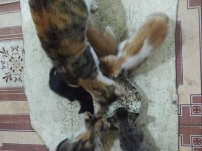 Ổ mèo 5 con 0
