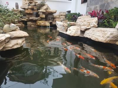 Sân vườn tiểu cảnh, bể cá koi hải phòng 1