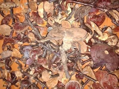 Nấm lim rừng tự nhiên bán theo cân 1