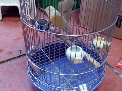 Lồng chim inox 1