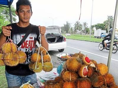 Cung cấp giống cây sầu riêng musaking nhập khẩu malaysia 1
