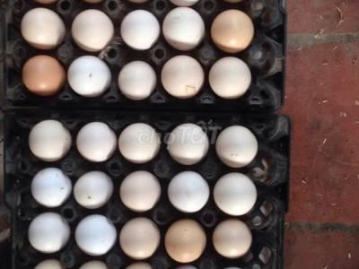 Bán trứng gà thịt gà đồi 0