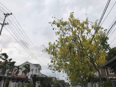 Nhà mặt tiền khu biệt thự Phạm Phú Tiết, song song Nguyễn Hữu Thọ 0