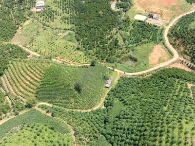 Khu nghỉ dưỡng 3,6 ha, view đồi, đường lớn, Cách trung tâm Bảo Lộc 13km 3