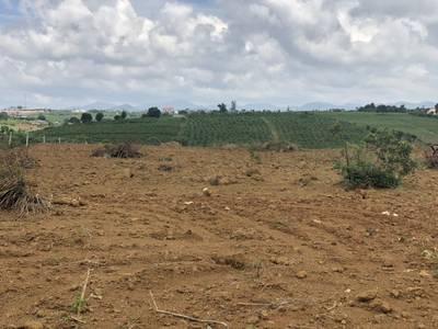 Chính chủ bán đất nền biệt thự 10000m2 tại Dambri, nơi xứ sở sương mù 5