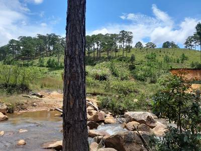 Bán 12ha đất Păng Tiêng,Lâm Hà,Lâm Đồng. 3