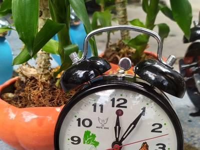 Đồng hồ , đồng hồ gà lên dây cót 1