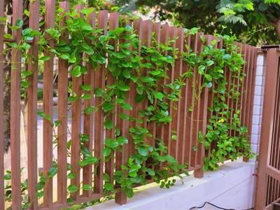 Thi công hàng rào, lan can bằng gỗ nhựa Việt Pháp 1
