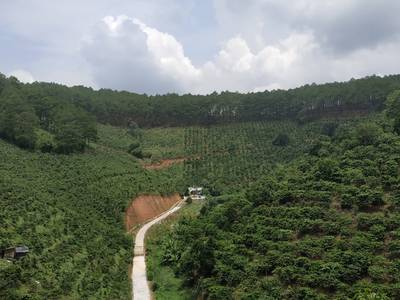 Cần bán vườn cà phê tại Thôn 3-Mê Linh-Lâm Hà-Lâm Đồng, cách quán Mê Linh Coffee Garden 2.5 km 0