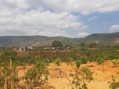 Bán lô đất chính chủ tại Xã Đông Thanh, Huyện Lâm Hà, Tỉnh Lâm Đồng. Giá đầu tư 4
