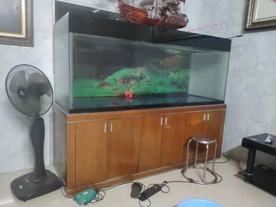 Bán gấp bể cá rồng 2m 8triệu 2