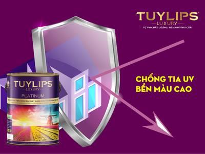 Tuyển đại lý phân phối sơn nước thương hiệu TUYLIPSLUXURY 4