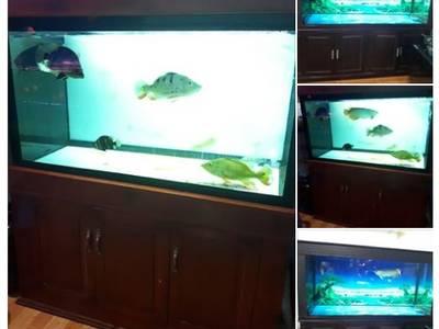 Thanh lý bể cá rồng 0