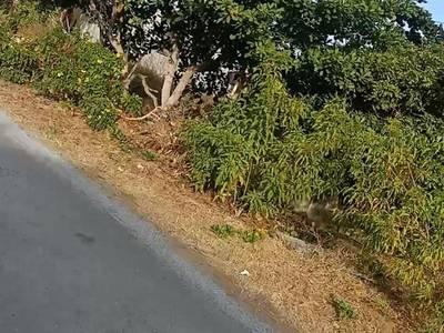 Chính chủ cần bán lô đất vị trí đẹp tại thị xã duyên hải, tỉnh trà vinh 4