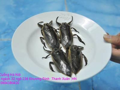 Cung cấp đặc sản Cà Cuống đực nhiều tinh dầu thơm và hướng dẫn cách chế biến tạo phong vị ẩm thực 15