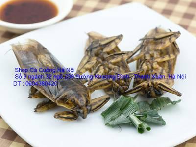 Cung cấp đặc sản Cà Cuống đực nhiều tinh dầu thơm và hướng dẫn cách chế biến tạo phong vị ẩm thực 13