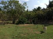 Bán đất gần KCN Giao Long Bến Tre