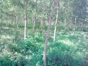 Bán đất Lâm Đồng 138 hecta  4,7 tỷ