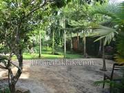 Nhà vườn 2,8 sào cuối Phan Huy Chú  kiểu nhà Đà Lạt    có ao cá, vườn cây ăn trái giá hấp dẫn