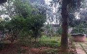Do muốn chuyển nơi ở gần chỗ làm nên tôi muốn nhượng lại khuôn viên nhà vườn