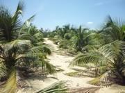 Bán đất khu du lịch biển cổ thạch bình thuận