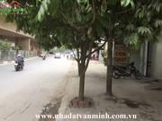 Tôi cho thuê nhà mặt đường số 15 Nguyễn Bỉnh Khiêm