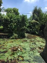 Bán vườn sầu riêng và măng cụt mặt tiền sông Lu xã Trung An Củ Chi