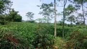 Cần bán 5000m2 đất làm khu nghỉ dưỡng, trang trại, homestay,.. tại xã Liên Sơn, Lương Sơn, Hòa Bình.