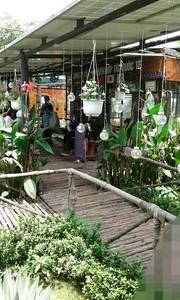 Bán gấp khu nhà vườn huyện củ chi diện tích 1050m2