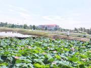 Khách cần bán gấp lô G03 hướng Đông Nam, view đẹp, sổ hồng riêng, CCCN trong ngày