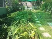 Nhà vườn 2 tầng Nguyễn Xiển gần CĐSP Trung Ương 300m2