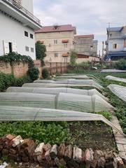 Chính chủ bán đất nền Đông Anh giá rẻ gần dự án thành phố Thông Minh,