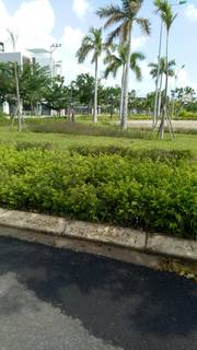 Bán lô Đảo Víp B1.8 - Hòa Xuân - đối diện công viên