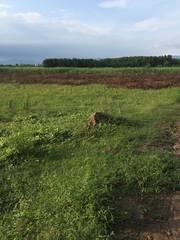 Chính chủ bán lô đất đẹp - giá rẻ ở xã Diên Đồng, huyện Diên Khánh